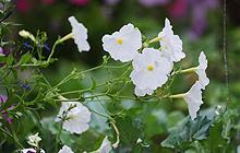 Plant-Centre-220x140